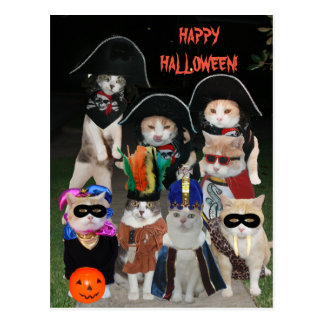 Gatos divertidos que rondan el Halloween Postal