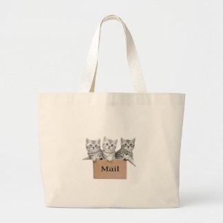 Gatos jovenes en caja de cartón con el correo de bolsa de tela grande