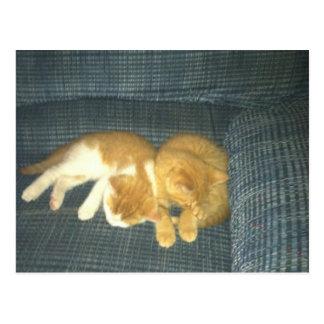 gatos lindos postal