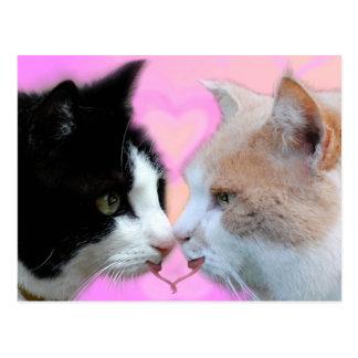 Gatos pareja de enamorados postal