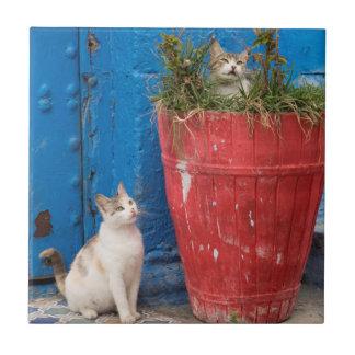Gatos que juegan alrededor, Rabat, Marruecos Azulejo Cuadrado Pequeño