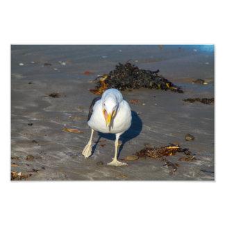 Gaviota de la playa