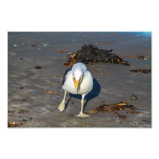 Gaviota de la playa impresion fotografica