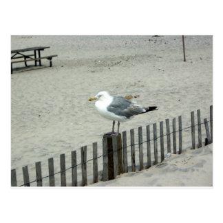 Gaviota de la playa postal