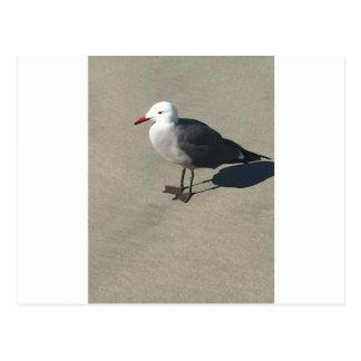 Gaviota en la playa de Sandy Postal