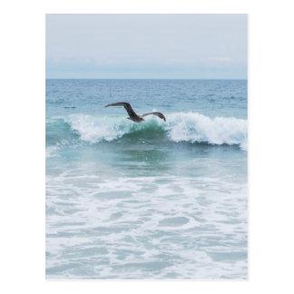 Gaviota en la playa en California Postal