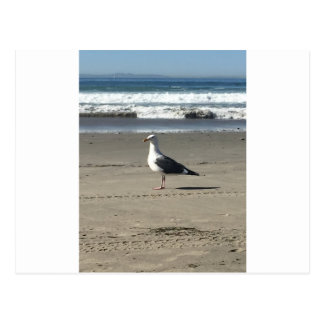 Gaviota en la playa postal