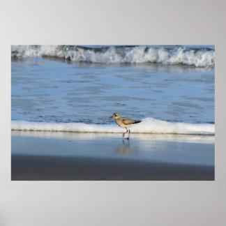 Gaviota en la playa póster