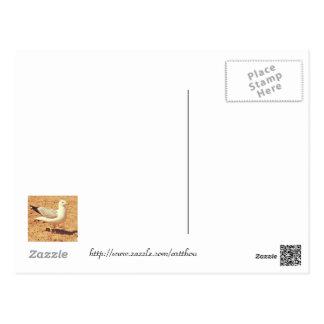 Gaviota en la postal del espacio en blanco de la p