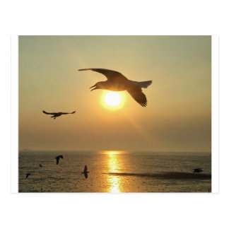 Gaviota en la puesta del sol postal