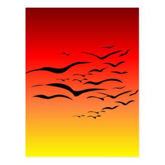 Gaviotas de la puesta del sol postal