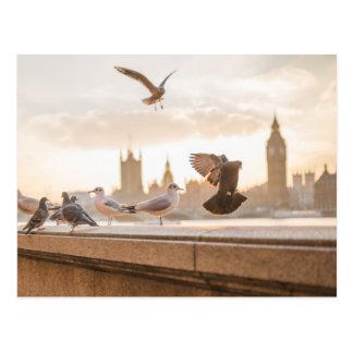 Gaviotas de Londres Postal