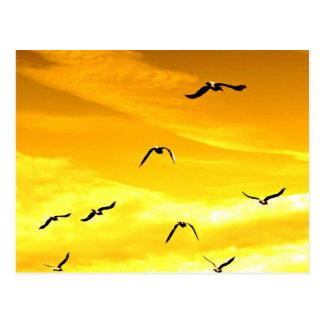 gaviotas que vuelan al éxito postal