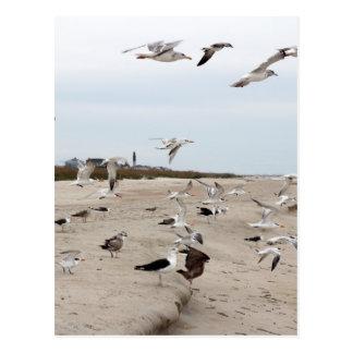 Gaviotas que vuelan, colocándose y comiendo en la postal