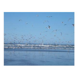 Gaviotas que vuelan sobre el océano y la orilla postal