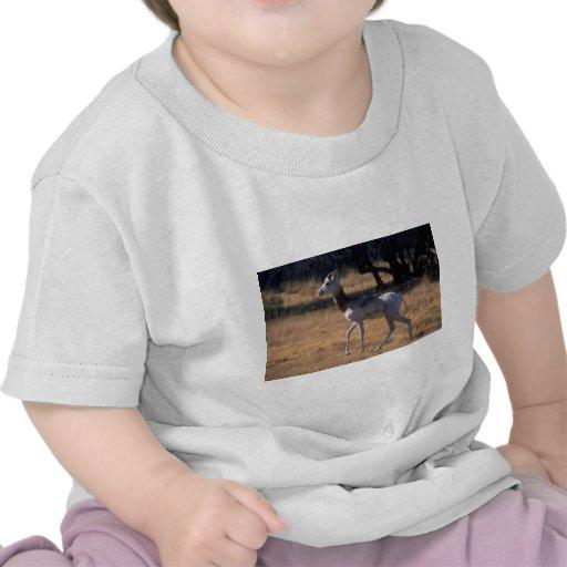Gazelle del Dama Camisetas