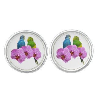 Gemelos Budgie con la orquídea púrpura