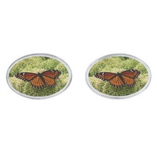 Gemelos Plateados Fotografía hermosa de la naturaleza de la mariposa