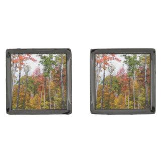 Gemelos Plomizos Caída en la fotografía colorida del otoño del