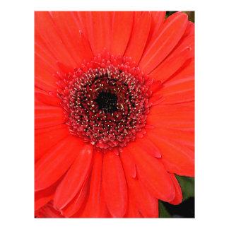 Gerbera rojo folleto 21,6 x 28 cm