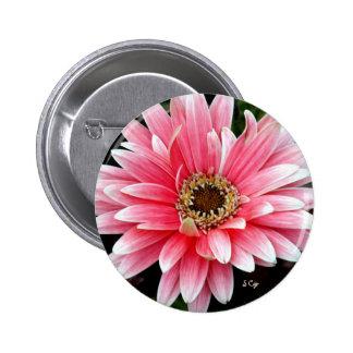 Gerbera rosado pin