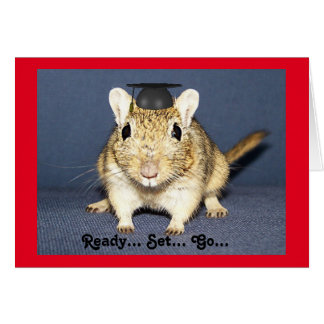 Gerbil de la graduación tarjeta de felicitación