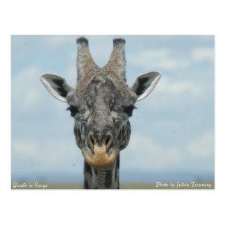 Girafe en Kenia Postal