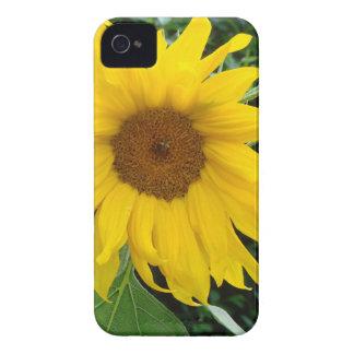 Girasol a solas iPhone 4 Case-Mate carcasa