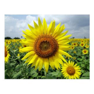 Girasol amarillo hermoso postal