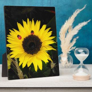 Girasol amarillo y dos mariquitas placa expositora
