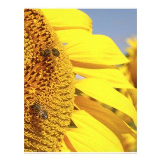 Girasol con las abejas de la miel tarjeton