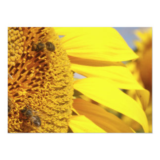 Girasol con las abejas de la miel invitación 13,9 x 19,0 cm