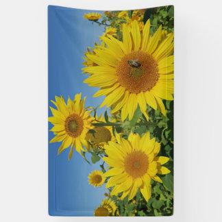 girasol en flor colorido del verano del cielo azul lona
