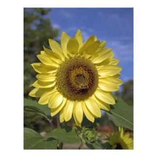 Girasol perfecto del amarillo del verano en cielo tarjetas informativas