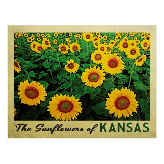 Girasoles de Kansas Postal