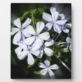 Globo de flores placa expositora