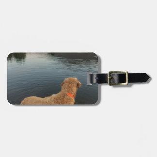 Golden retriever en una roca en el lago etiquetas para maletas