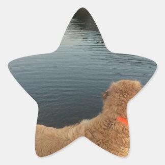 Golden retriever en una roca en el lago pegatina en forma de estrella