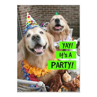 Golden retriever Yay es una invitación del fiesta