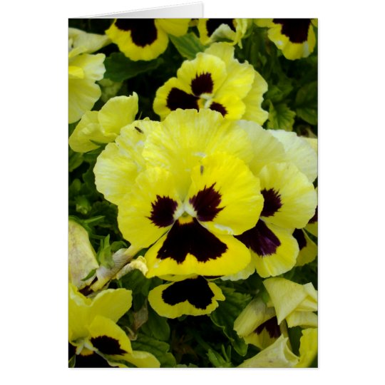 Golden_Yellow_Pansies, _Greeting_Card Tarjeta De Felicitación
