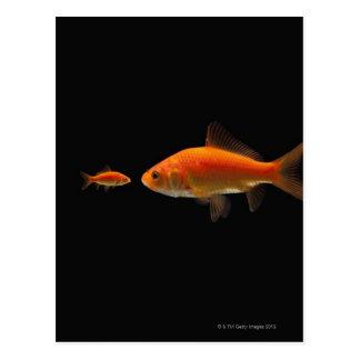 Goldfish 3 postal