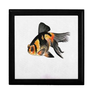 Goldfish de Demekin aislado Caja De Regalo