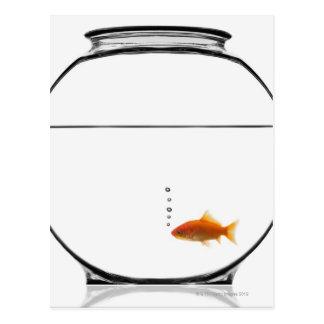 Goldfish en cuenco postal