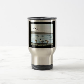 Golondrinas de mar caspias tazas de café