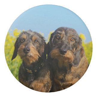 Goma De Borrar Foto linda de Dackel Doxie de dos perros del