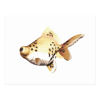 Google observó el Goldfish 4 Tarjetas Postales