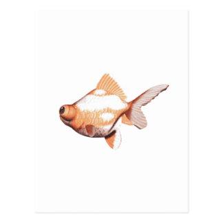 Google observó los pescados 2 del oro tarjetas postales