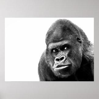 Gorila blanco negro póster