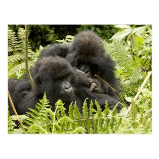 Gorila de montaña, familia en jerarquía del día postal