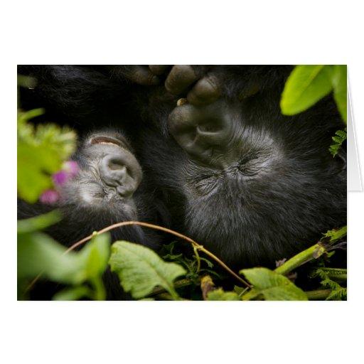 Gorila de montaña juvenil y su madre tarjetas